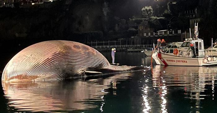 Βρέθηκε νεκρή μια από τις μεγαλύτερες φάλαινες στη Μεσόγειο