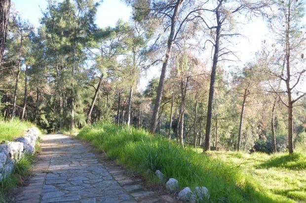 Πάτρα: Ψηφιακή πυρανίχνευση του Δασυλλίου μέσω του «Α. Τρίτσης»