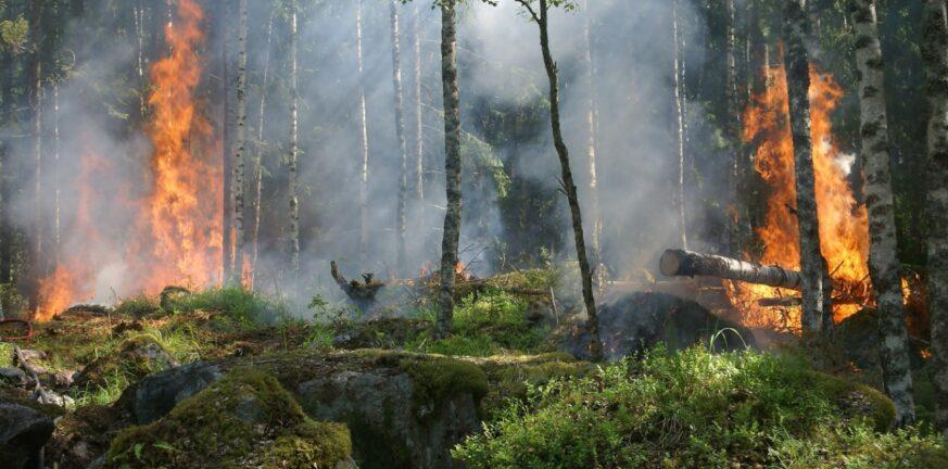 φωτια δασος