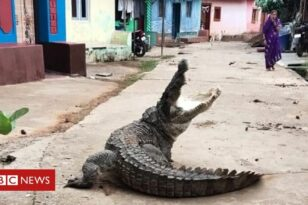 Γιγάντιος κροκόδειλος προκάλεσε πανικό στο χωριό της Ινδίας