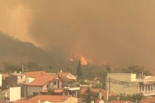 Φωτιά στα Βίλια: Ολονύκτια μάχη για τον περιορισμό του πύρινου εφιάλτη – ΝΕΟΤΕΡΑ - ΦΩΤΟ