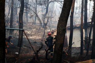 Νέα φωτιά στα Βίλια: Σε ύφεση το πύρινο μέτωπο- Κάηκαν σπίτια - Καταγγελίες εμπρησμού - ΦΩΤΟ και ΒΙΝΤΕΟ