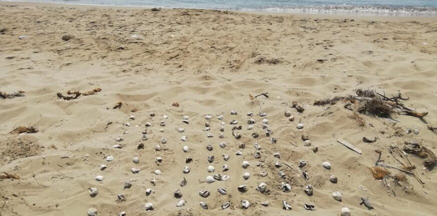 χελωνακια