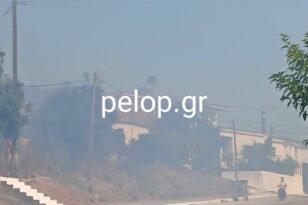 """Φωτιά στην Άρλα: Βλέπουν """"εσκεμμένη"""" φωτιά - ΒΙΝΤΕΟ"""
