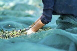 Αιγιάλεια: Υποβολή προτάσεων, για την επιχορήγηση προώθησης ελαιολάδου και ελιάς