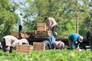 Εργάτες γης: Παράταση προσωρινής απασχόλησης για 90 ημέρες