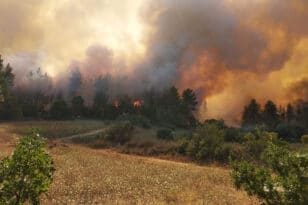 Φωτιά στην Ακραδία: Μάχη με τις αναζωπυρώσεις - Στην είσοδο Νεοχωρίου οι φλόγες