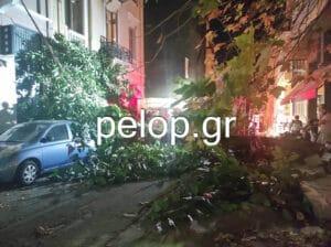 Αναστάτωση στο κέντρο της Πάτρας από πτώση δένδρου - «Παραλίγο να θρηνήσουμε θύματα»- ΦΩΤΟ - ΒΙΝΤΕΟ
