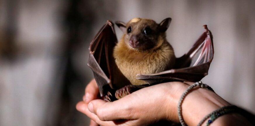 Κορονοϊός-Καμπότζη: Επιστήμονες αναζητούν την προέλευση του ιού σε νυχτερίδες