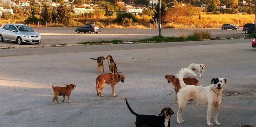 Δυτική Ελλάδα: Δήμος αποζημιώνει γυναίκα που τραυμάτισε αδέσποτος σκύλος σε πλατεία