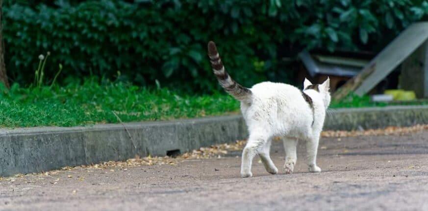 cat thumb large