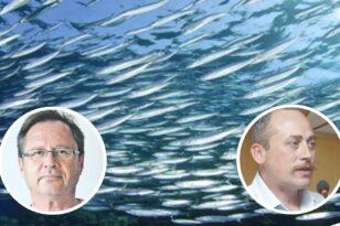 Αχαΐα: Η υψηλή θερμοκρασία εξαφάνισε τα ψάρια