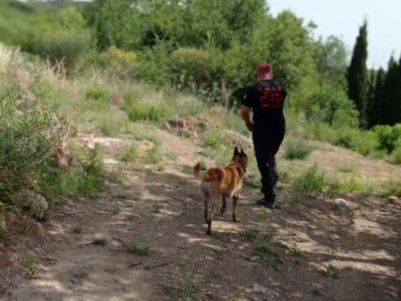Ο σκύλος της 6ης ΕΜΑΚ Πάτρας στις έρευνες για αγνοούμενο στην Τροιζηνία