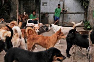 Νότια Κορέα: Πιθανό «φρένο» στην κατανάλωση κρέατος σκύλου