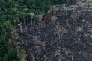 Βραζιλία: Ακραίοι καύσωνες εξαιτίας της αποψίλωσης του Αμαζονίου
