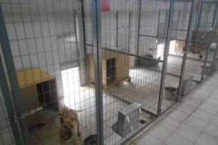 Καταφύγιο αδέσποτων ζώων στο Δρέπανο - Θέμα χρόνου η λειτουργία του