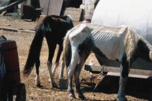 Ασπρόπυργος: Ξεκινά η δίκη για το κολαστήριο των αλόγων σε μονάδα ιπποειδών