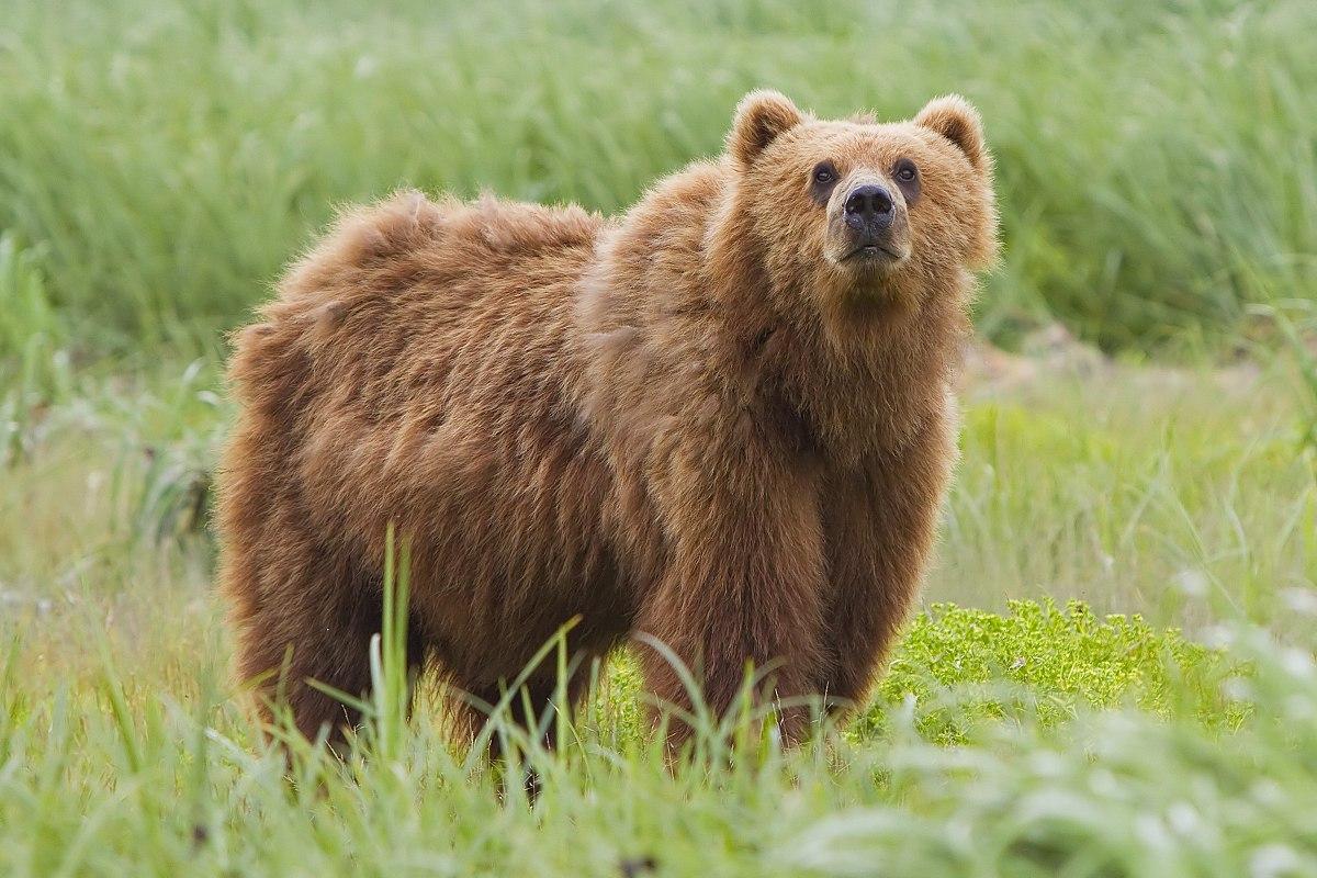 Αρκούδα δάγκωσε κυνηγό στην Κοζάνη!ΒΙΝΤΕΟ