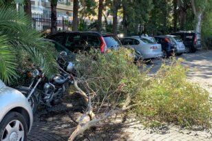 «Βρέχει»… δένδρα - 4ο περιστατικό στην Πάτρα - ΦΩΤΟ - ΒΙΝΤΕΟ