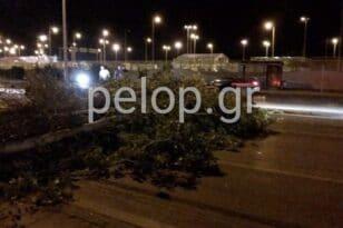 Πάτρα: Νέα πτώση δένδρου - Μποτιλιάρισμα στην Ακτή Δυμαίων ΦΩΤΟ