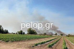 ΕΚΤΑΚΤΟ: Φωτιά στο Βουπράσιο - ΦΩΤΟ