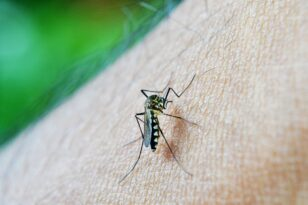 Κουνούπια από την Κορέα και θα μπορούσαν να «αποικίσουν» στην Ελλάδα