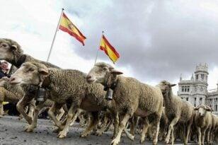 Ισπανία: Παρέλαση... προβάτων στη Μαδρίτη