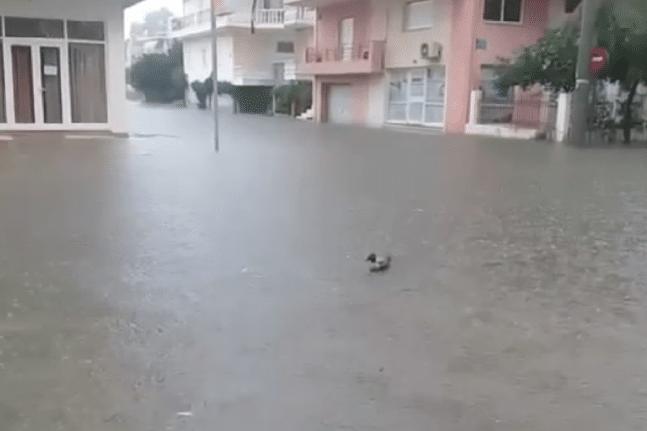Σε κατάσταση έκτακτης ανάγκης κηρύχθηκαν οι Δήμοι Ήλιδας και Πηνειού