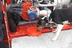 Σκύλος έπεσε σε πηγάδι 20 μέτρων στην Κοζάνη - Σώθηκε από την ΕΜΑΚ
